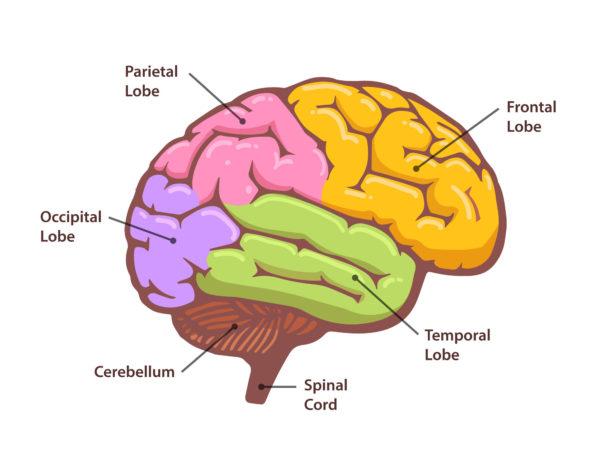 El cerebro humano necesita arte